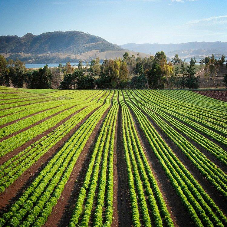 Productos agroalimentarios Torvigo