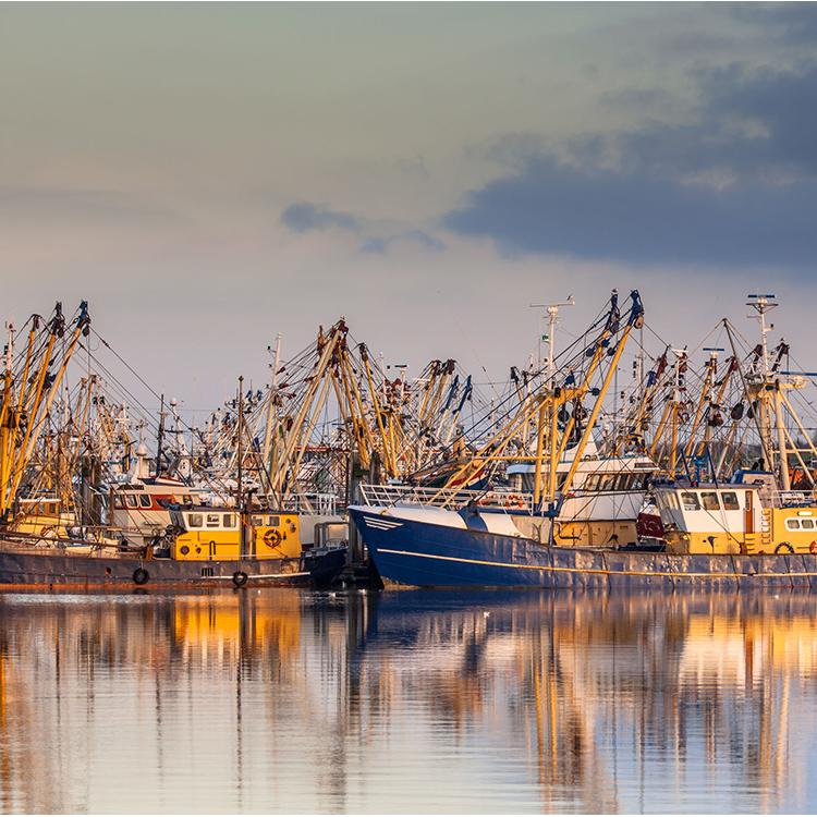 Productos sector pesquero Vigo